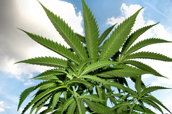 Конопля статья 228 о марихуане в исламе