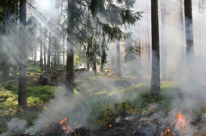 Особый противопожарный режим вводится в Томской области