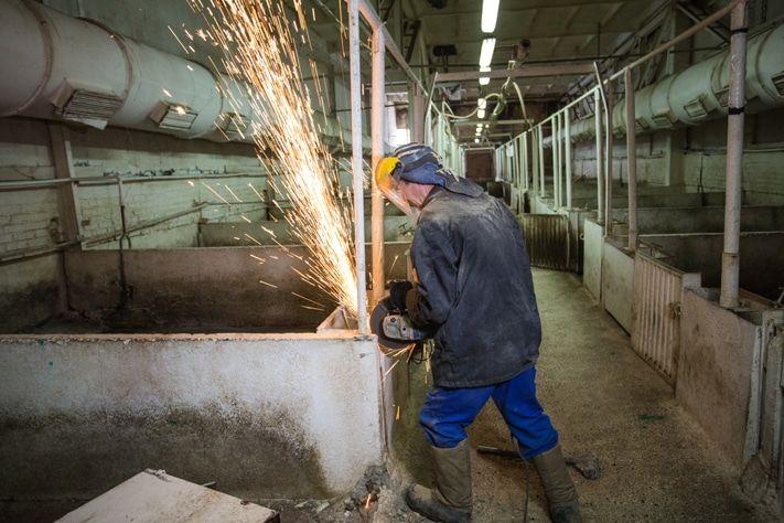 Реконструкция свинокомплекса «Томский» находится в самом разгаре