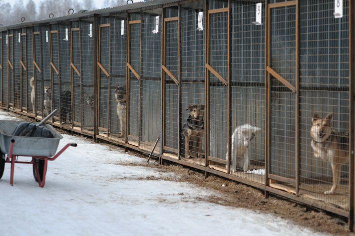 Томск потратит 7,5 млн руб. наотлов исодержание бродячих собак