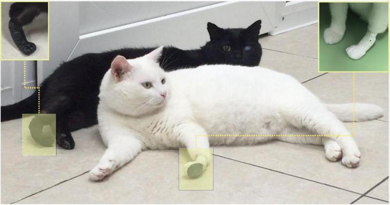 Искусственные «лапы», созданные вТомске, прижились у 3-х котов