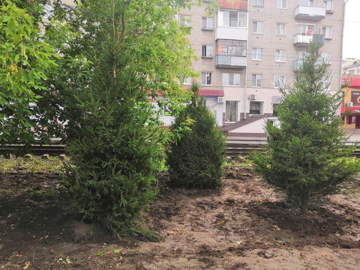 В Томске на бульваре по пр.Кирова завершили высадку деревьев