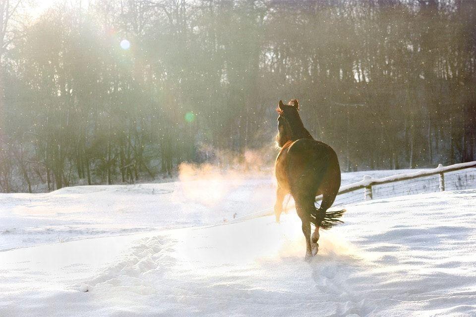 Автомобиль столкнулся с лошадью в Томской области, два человека госпитализированы