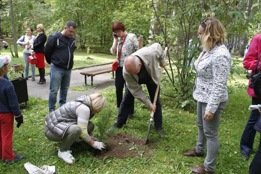 ВТомске вЛагерном саду заложен «Народный кедровник», высажено 800 деревьев