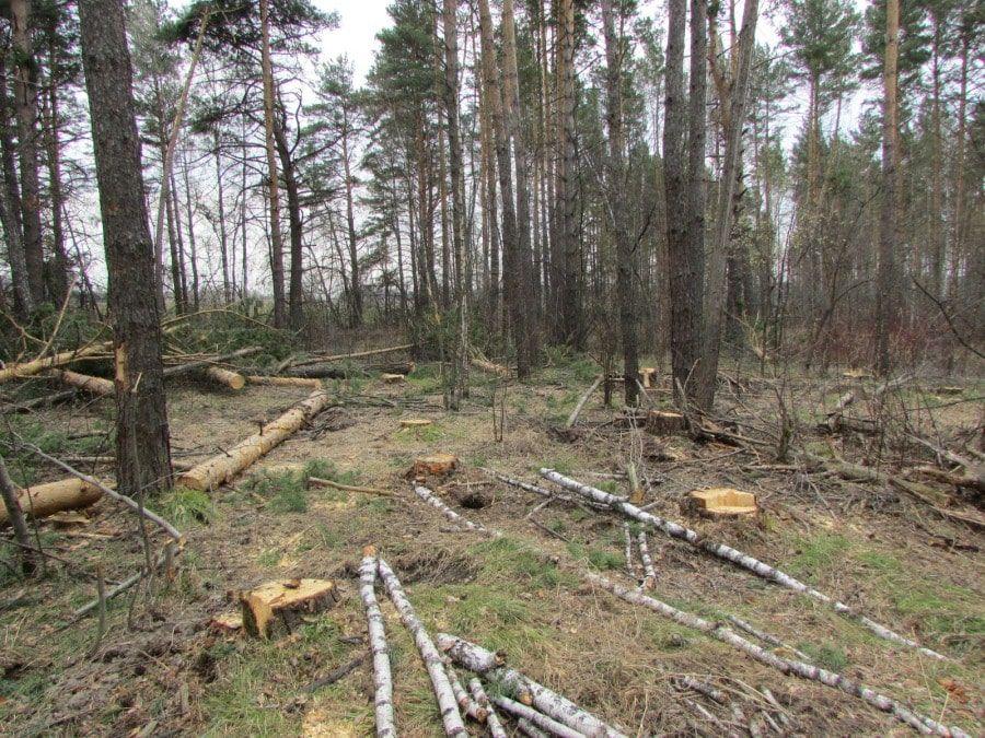 В Томске обнаружили две незаконные вырубки на 6 млн рублей