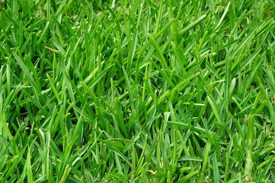 Мэр Томска озаботился газонами