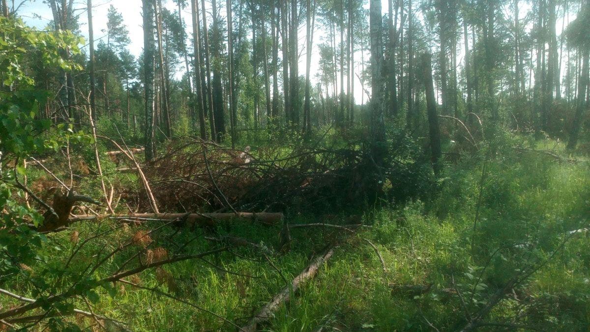 В Томске у Кузовлевского тракта незаконно вырубили деревьев на 2,5 млн рублей